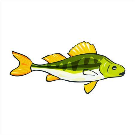 Vector illustration of fishes. Yellow Perch. Vector illustration Archivio Fotografico - 132617474