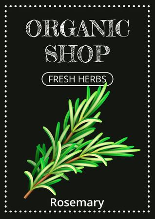 Vertical banner with a realistic rosemary on coated chalk background. Fresh herbs, popular culinary plants, natural health care. Template for products, web banners and leaflets. Vector illustration