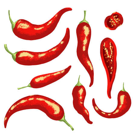 Red hot chili pepper on white background. Isolated vector illustration.