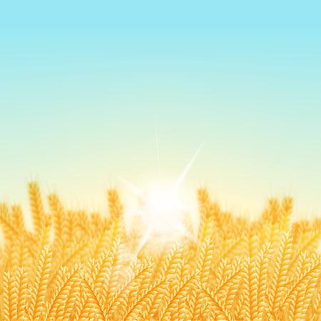 vector illustratie. Tarwe veld op een zonnige ochtend. Achtergrond