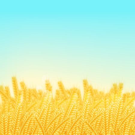 vector illustration. Wheat field on a Sunny morning. Background Illustration