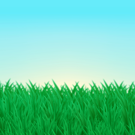 thickets: The natural background. Thickets of green grass on the lawn, the blue sky. Design for brochure, business cards, banner.