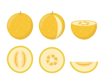 Set of colorful melon icons