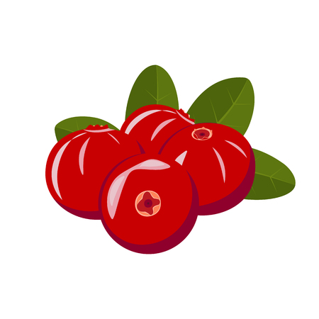 Red berries of cranberries on a white background with green leaves. Vector illustration