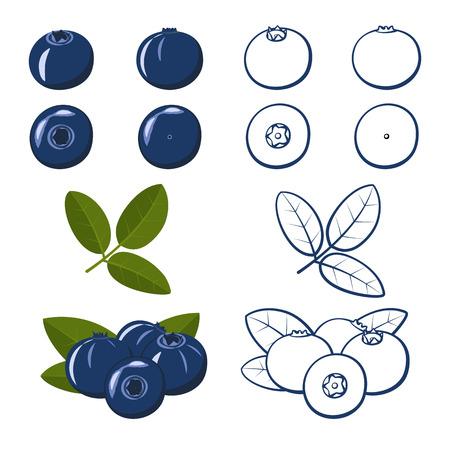 Conjunto de arándanos. Colorido y contorno. Ilustración vectorial. Ilustración de vector