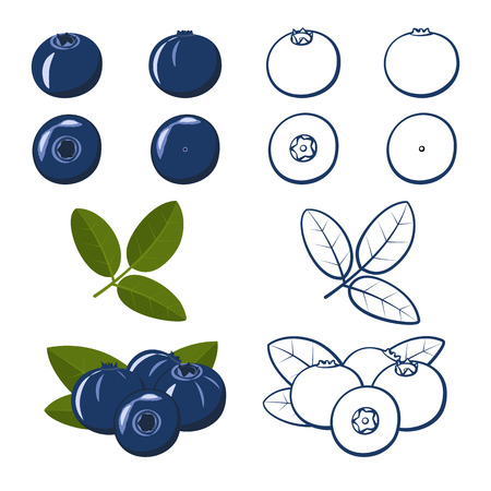 Set of blueberries. Colorful and outline. Vector illustration.