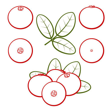 Set of outline berries of red cranberries with green leaves on a white background. Vector illustration.