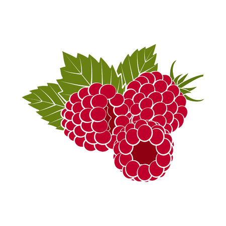 Red raspberries with green leaves closeup on a white background. Design for a label, banner, poster. Vector illustration.