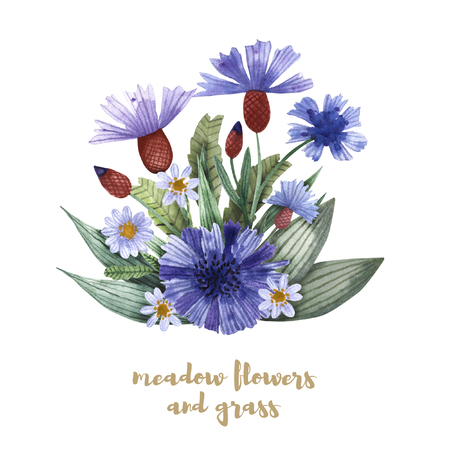 A collection of herbs and flowers. Chamomile, plantain, cornflowers. Watercolor. Banco de Imagens - 105583503