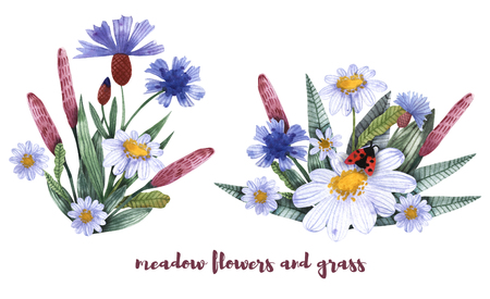 A collection of herbs and flowers. Chamomile, plantain, cornflowers. Watercolor. Banco de Imagens