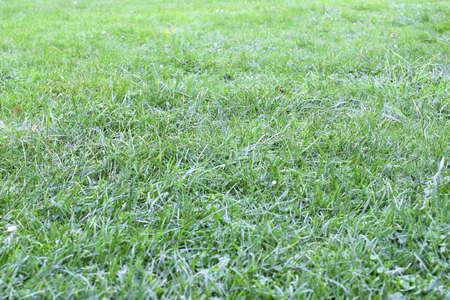 parter: lawn grass