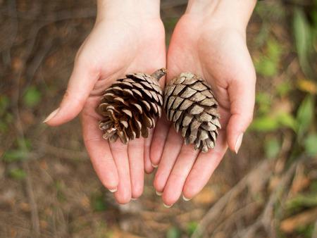 pinecones: Pinecones