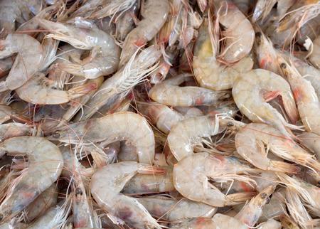 seafruit: Fresh shrimps Stock Photo