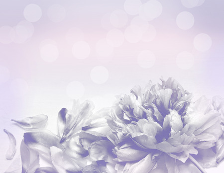 colorize: Beautiful flowers made with color filters - Abstrack background Stock Photo