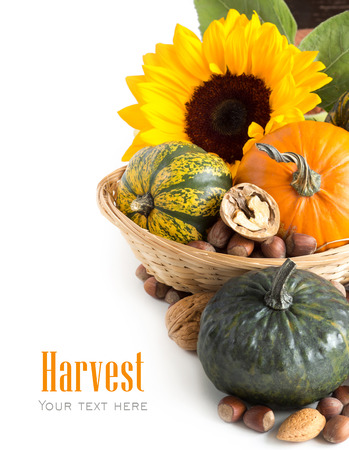Autumn background with pumpkins, sunflower and nuts photo
