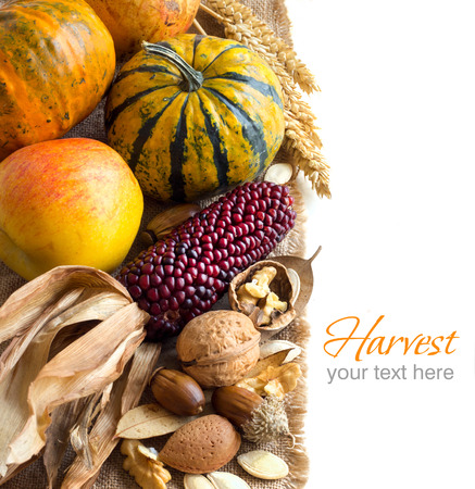 Harvest background with corn, pumpkins, apple and nuts Archivio Fotografico