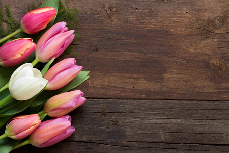 Pink and white tulips on dark wood background