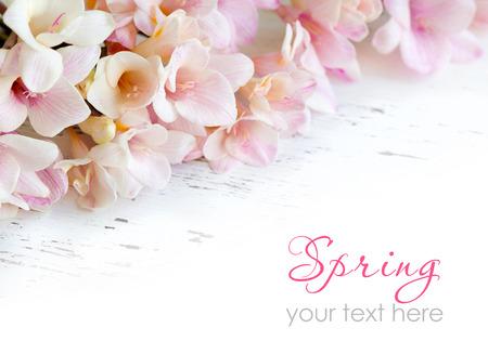 오래 된 흰색 초라한 테이블에 핑크 프리지아 꽃