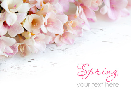 Pink freesia flowers on old white shabby table