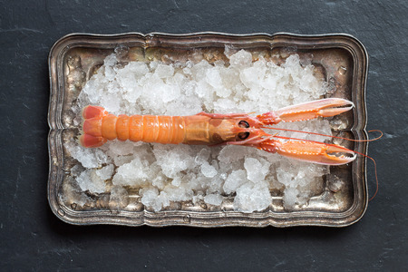 langoustine: Raw langoustine on ice on a silver tray over dark background top view
