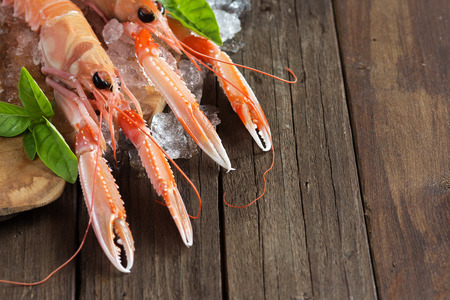 langoustine: Raw langoustine on ice with basil on the old wooden table