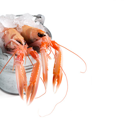 Raw langoustines on ice in a bucket isolated in white Archivio Fotografico