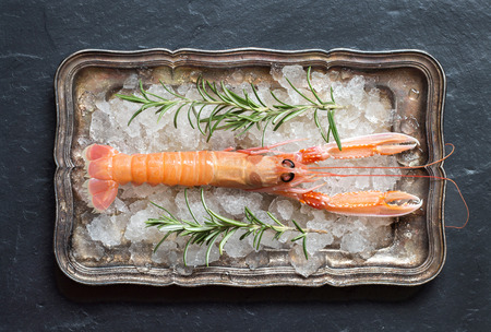 langoustine: Raw langoustine and rosemary on ice on a silver tray over dark background top view