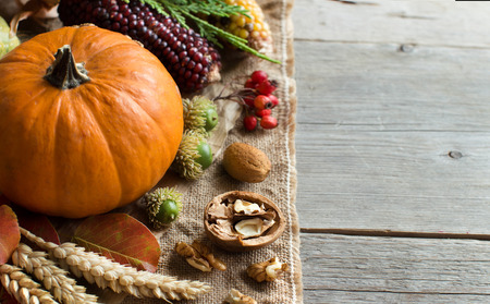 elote: Calabazas, mazorca de maíz, espigas de trigo, nueces, bellotas, hojas y bayas en el fondo de madera Foto de archivo