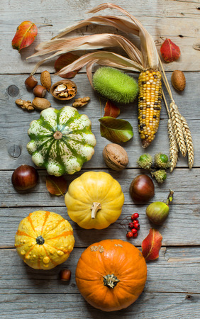 corn on the cob: Pumpkins, corn cob, wheat spikes, nuts, acorns, leaves and berries on wooden background