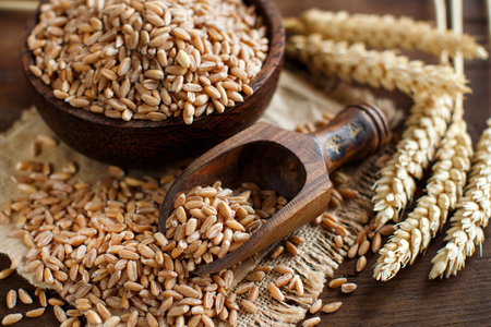 Intero crudo farro grano in una ciotola con un cucchiaio di legno e le orecchie di farro sul tavolo Archivio Fotografico - 51621926