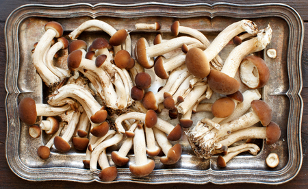 Agrocybe aegerita mushrooms (Pioppino) on a tray