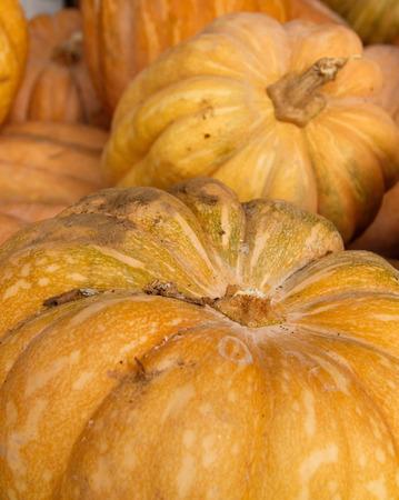 Pumpkins on a local farmers market close up