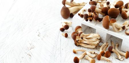 Agrocybe aegerita funghi (Pioppino) su un tavolo di legno