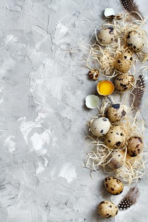 Quail eggs on a grey background top view Archivio Fotografico