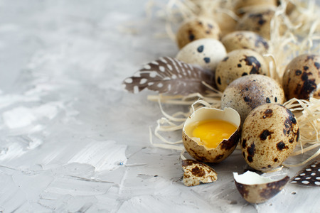 Quail eggs on a grey background close up