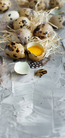 Quail eggs close up on a grey background
