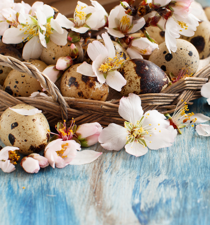 Quail eggs and almond flowers on  a blue wooden background