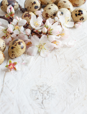 Quail eggs and almond flowers on  a  wooden background