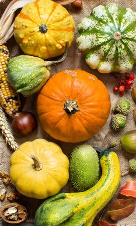 Pumpkins, corn cob, wheat spikes, nuts, acorns, leaves and berries on wooden background