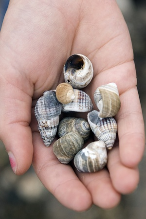 Cockleshells in a children Stock Photo - 13240669