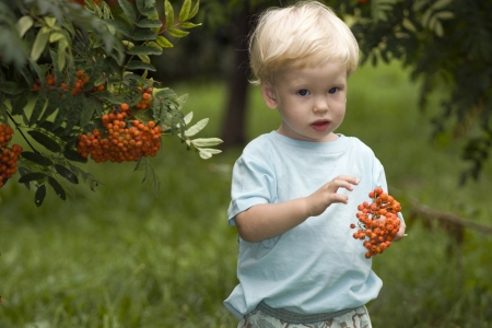 Baby with mountain ash berries  photo