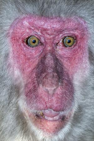 baboon: Monkey baboon Stock Photo