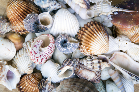 seashell: Lots of different seashells piled together. Seashell background.