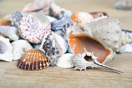 seashells: Lots of different seashells piled together on wooden surface. Seashell background. Stock Photo