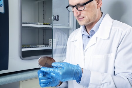 an inoculation: Microbiologist hand cultivating a petri dish whit inoculation loops, beside autoclave for sterilising surgical and other instruments inside. Stock Photo