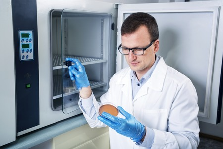 sterilization: Microbiologist hand cultivating a petri dish whit inoculation loops, beside autoclave for sterilising surgical and other instruments inside. Stock Photo