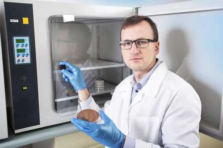 an inoculation: Microbiologist hand cultivating a petri dish whit inoculation loops, beside autoclave for sterilising