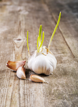 sprouted: Sprouted garlic Stock Photo