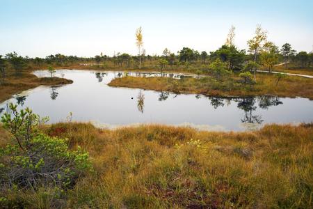 Big swamp wetlands Kemeri national park, Latvia. Travel concept Stock Photo