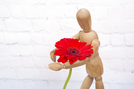 Wooden mannequin trying to represent human movements in moving actions isolated on a white background. Anatomical model hugs a beautiful red flower.
